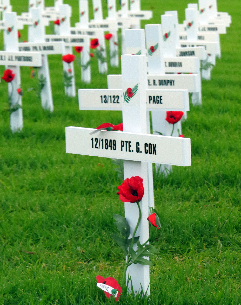 History of the anzac poppy rediscover why is the poppy the symbol of remembrance mightylinksfo