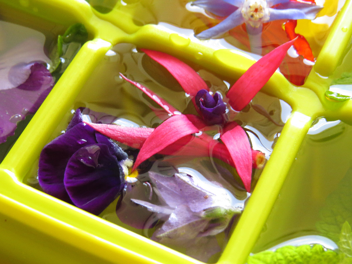 Flavoured water and edible flowers collide rediscover edible flower flavoured ice edible flower cubes1 edible flower cubes2 izmirmasajfo