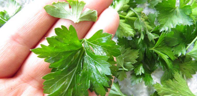 how to make fresh parsley tea