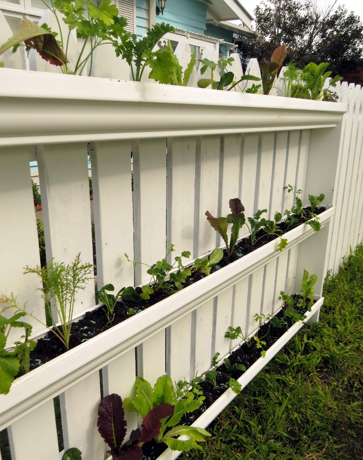 My vertical veggie community garden   Rediscover